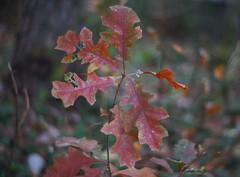 DSC02598 (Lens Lab) Tags: sony a7r plants garden komura 80mm f18 leaves