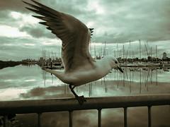 St. Kilda Pier (ericmontalban) Tags: melbourne australia stkilda