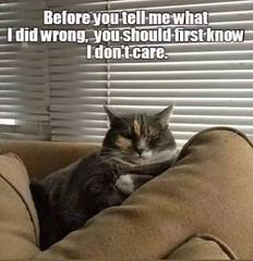 I don't care (gagbee18) Tags: animals cats funny idontcare memes