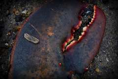 Claw (brucetopher) Tags: lobster claw crusher crush