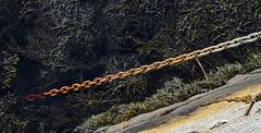 Tide Chain (brucetopher) Tags: chain links tide rust rusted rusty water ocean saltwater corrosion harbor seaweed lookingdown down over edge granite galvanized steel anchor line metal