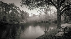 Lever de Soleil Brumeux (JDS Fine Art Photography) Tags: trees monochrome bw lake park naturepreserve naturepark sunrise mist misty serenity beauty naturalbeauty nature naturesbeauty peaceful inspirational chilly cool