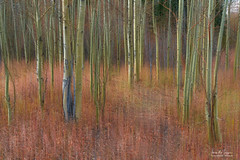 Soothing Wilderness Wonder (Striking Photography by Bo Insogna) Tags: forest wilderness red reds pastel soothing rockymountains woods scenic scenery aublur abstract motion motionblur tumn fall seasons light foliage colorful beautiful peaceful calm trees landscapes jamesboinsogna colorado bouldercounty sonya7rll boinsognacom