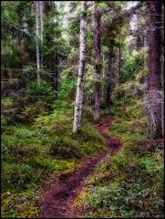 Storm (Jonas Thomén) Tags: storm wind vind skog forest woods trail stig motionblur rörelseoskärpa