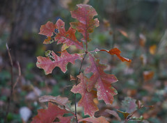 DSC02599 (Lens Lab) Tags: sony a7r plants garden komura 80mm f18 leaves
