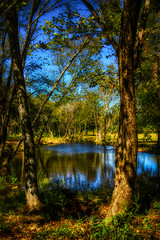Oasis (Bombatron) Tags: oasis pond small tress woods wilderness explore flickr canon 6d voigtlander 40mm f2 sunny outdoors nature trees light shadows foliage