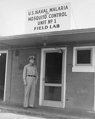 Anglų lietuvių žodynas. Žodis malaria mosquito reiškia maliarija uodas lietuviškai.