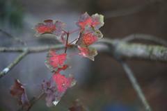 DSC02601 (Lens Lab) Tags: sony a7r plants garden komura 80mm f18 leaves
