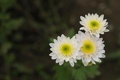 Dio è al mio fianco (eshao5721) Tags: lachiesadidioonnipotente lodeadio laverità laparoladidio lavocedidio vangelo testimonianze dioonnipotente salvezzadidio amoredidio fiori