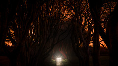 Not so dark Hedges (Bastian.K) Tags: dark hedges ireland northern ni beech forest wald allee alley dunkel dunkle sunstar blende sunstars blendenstern loxia8524 loxia2485