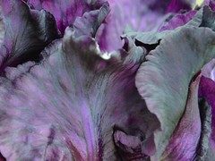 Black Iris (kupriyanova_marina) Tags: macrophoto macroart art leaves colour flowers summer nature beauty garden iris ирисы лепестки цветы макрофото