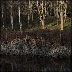 Waters Edge (Garry Corbett) Tags: fuji35mmf14lens fujixpro3 canalside trees sunlight winterlight towpath reflections waterways cgarrycorbett2020 bluejazzbuddha