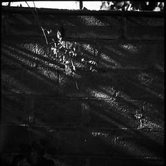 Drop (Manuel&TheSea) Tags: monochrome mediumformat ishootfilm tlr analoguephotography analogue iso100 bw rodinal125 rodinal ilfordfilm ilford delta100 delta100film somberthiotparis luxoflex atos2 6x6 squareformat vintagecamera 50scamera lightsandshadows wall leaves lights shadows homedevelop 900develop 9minutesdevelop