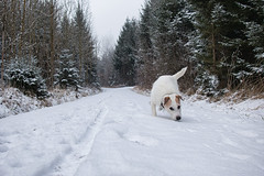White (Oliver Kuehne) Tags: anton bayern bavaria germany winter hiver schnee snow neige dog hund chien sonyrx100mii allgäu memmingen