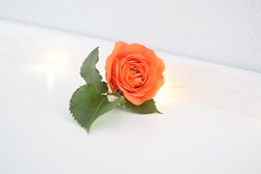Photoshoot_1_01222020_129 (ezjuxlhy9) Tags: flowers orange white