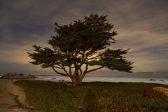 Pacific Grove, California: Point Pinos Tree and Stars (rocinante11) Tags: tree night pacificgrove california montereypeninsula unitedstates ambient longexposure timedexposure stars