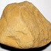 Hillsboro Sandstone (Lower Devonian; northwest of Sinking Spring, Ohio, USA) 14