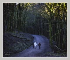 Macclesfield Forest 💙 (terryhamlett) Tags: fujifilm fuji macclesfieldforest cheshire woods nature scenic walking path lightandshadow people leisure trees sunlight