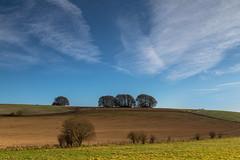 Hilltop Copses (THE NUTTY PHOTOGRAPHER) Tags: avebury copse skys wiltshire farmland fences