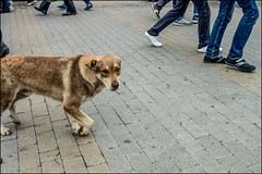 4_DSC2132v2 (dmitryzhkov) Tags: urban city everyday public place outdoor life social documentary photojournalism street dmitryryzhkov moscow russia streetphotography color colour pet dob animal animals motion