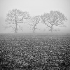Photo of Three Trees in The Mist