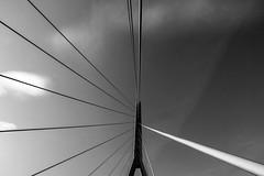Les câbles (Fab. A) Tags: architecture bridge pont noiretblanc monochrome blackandwhite canonm