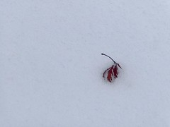 Impermanence (judithjackson957) Tags: miksang contemplative winter haiku impermanence abstract