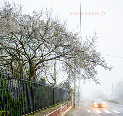 Hiver 2020 (louis.labbez) Tags: winter tree hiver arbre gel glace neuvilly street france car wall village grille circulation mur phare brouillard bourgeon hautsdefrance labbez white blanc nid ice route rue voiture