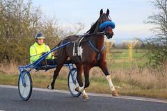 Trotting in Teesside (Jet737) Tags: trotting teesside horse driver harness road training long newton longnewton england