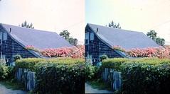 Batch G 0167 (dizzygum) Tags: vintage 3d stereo slide image 1959 house exterior