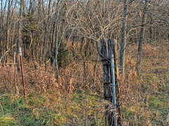 Fence No One Sees (clarkcg photography) Tags: fence rural country oklahoma woods evening nature barbedwire cornerpost gate tpost fencedfriday
