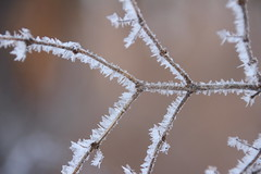 Crystallized (Salamanderdance) Tags: hoarfrost fenner ice crystals branch nature winter cold