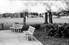 In The Park (toerict) Tags: 35mm analogfilm analogphotography fomapan blackandwhite bw lightleak filmphotography
