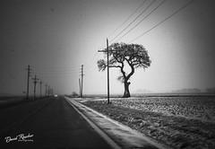 The Malter Tree (roscherphotography) Tags: landmark tree us65hwy salinecountymissouri