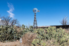 Cactus and windmill. Marathon, Texas, December, 2019
