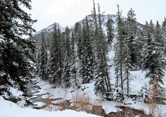 Crystal River (Patricia Henschen) Tags: marble colorado mountain mountains westelk clouds winter trees nationalforest scenichistoricbyway forest snow backroad rural whiteriver crystal river
