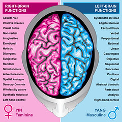 Human brain left and right functions (Wally's Slideshow) Tags: anatomical anatomy brain brainy cerebellum cerebral cerebrum genius head health human illustration intellect intellectual intelligence isolated lobe medical memory mentality mind nerve nervous neurology organ psychology science scientific section sense sensory synapse system telepathy thalamus tissue wisdom function functions left right hemisphere top up yin yang feminine masculine pink blue italy