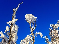 Snow formatioms. Tuddal. Norway
