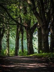 20190804-0058 (www.cjo.info) Tags: edinburgh europe europeanunion mzuiko m43 m43mount microfourthirds olympus olympusmzuikodigitaled40150mmf4056r olympuspenf scotland unitedkingdom waterofleith waterofleithwalkway westerneurope zuiko digital flora path plant tree wood woodland woods