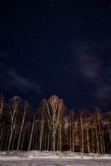 Night sky at Rovaniemi (Antti Hämäläinen) Tags: night sky rovaniemi finland winter north arctic snow trees blue stars circle white dark clouds birch