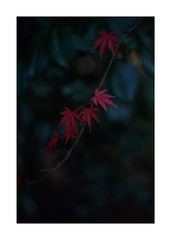 This work is 17/18 works taken on 2019/12/27 (shin ikegami) Tags: sony ilce7m2 a7ii sonycamera 50mm lomography lomoartlens newjupiter3 tokyo 単焦点 iso800 ndfilter light shadow 自然 nature naturephotography 玉ボケ bokeh depthoffield art artphotography japan earth asia portrait portraitphotography