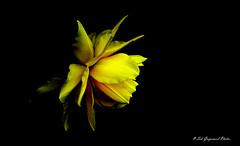 seb-7943 (Seb Guyomard Photos) Tags: flower fleur ambiance nature art sweet beauty beaute france nikon sigma