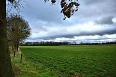 0391 meadow (leike49) Tags: outdoor natuur nature landscapeview limburgslandschap tongerlo limburg belgië amateurphotography nikon d5300 clouds