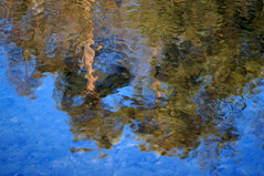 Reflections (gripspix) Tags: 20200121 nex sony lenstest objektivtest makinon14580200mm f45 openaperture offenblendig tree baum branch ast reflections reflexionen water wasser neckar spiegelung