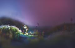 dewdrop on moss (Dhina A) Tags: sony a7rii ilce7rm2 a7r2 a7r kaleinar mc 100mm f28 kaleinar100mmf28 5n m42 nikonf russian ussr soviet 6blades manualfocus bokeh lens water drops moss dewdrops