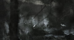 early in the morning (jean.francois.dalle) Tags: heron bird early far winter japanese style fujifilm xt3 nikkor vintage lens wildlife countryside