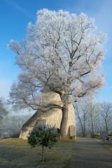 Winterstimmung an der Berger Kirche (Bluespete) Tags: tree baum nebel reif frost frozen gefroren winter mood stimmung winterstimmung