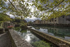 santa fiora (Fabrizio Diletti (Fermo, Italia)) Tags: reflections water light shadow lake fish riflessi sun sole flowers