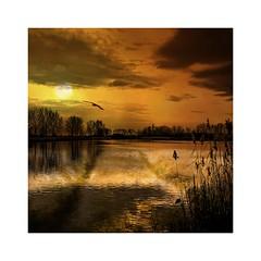 F l y (b_kohnert) Tags: digitalpainting digitalart bird sun sky outdoor clouds trees lake sea landscape nature