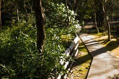 the garden of jindai temple (N.sino) Tags: leica m9 summicron35mmasph jindaiji chofu temple wood garden 深大寺 調布 庭 木 笹